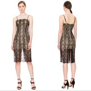 Keepsake Rhythm Black Lace Fitted Dress